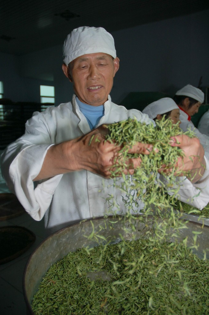 Making green leaf tea