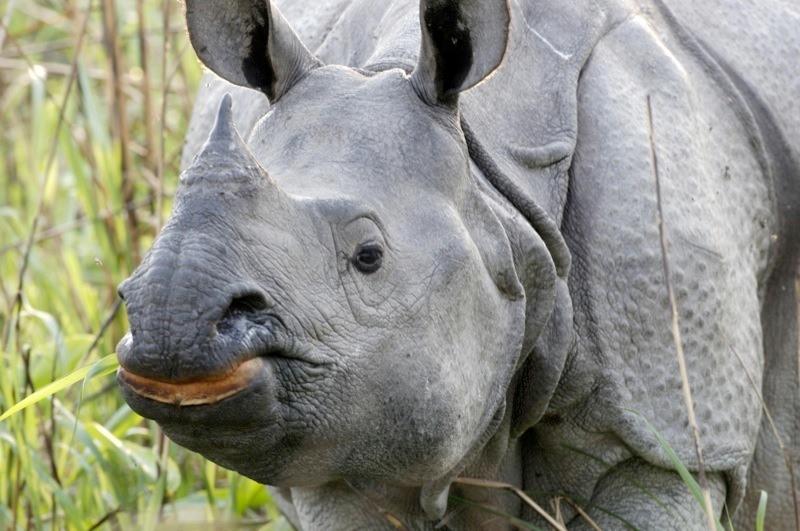 One-horned Rhino - photo credit: Lip Kee