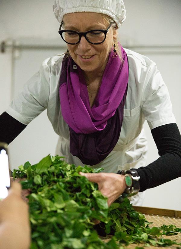 Maria producing oolong tea