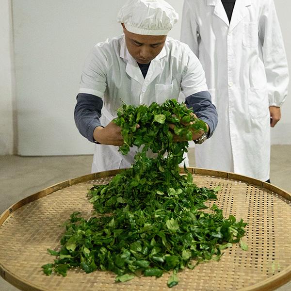 Tea Master Huang