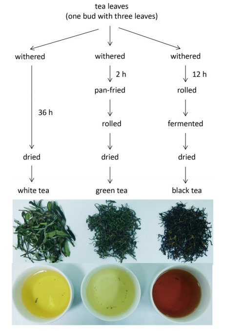 White Tea Research Figure 1