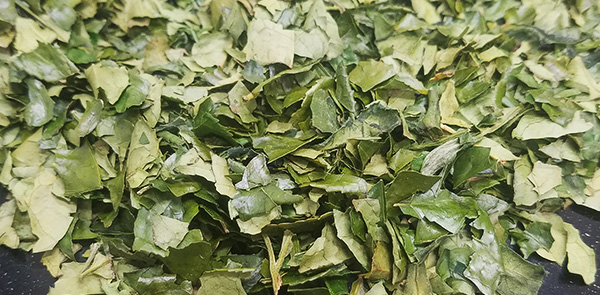 tencha tea leaves